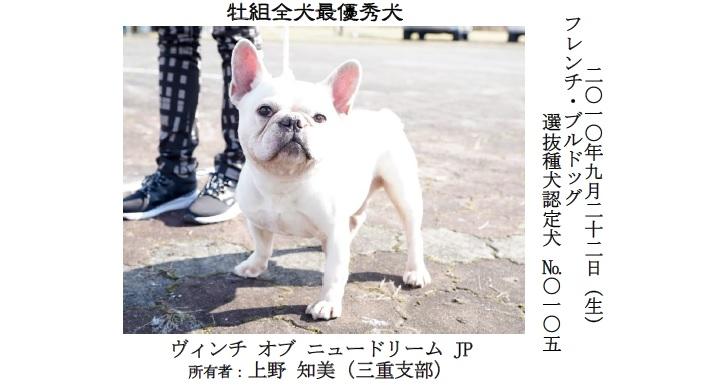 20191110-08-全犬種最優秀犬牡