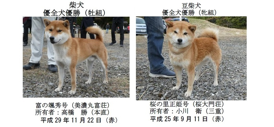 20191110-09-全犬種優全犬優勝