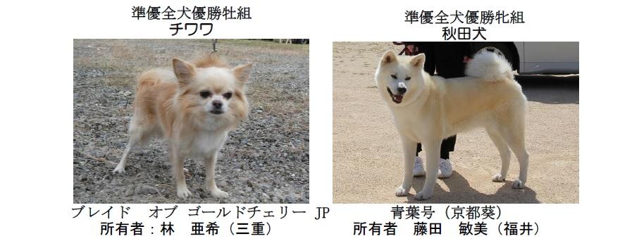 20191110-10-全犬種準優全犬優勝