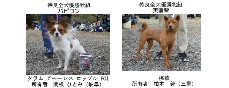 20191110-11-全犬種特良全犬優勝