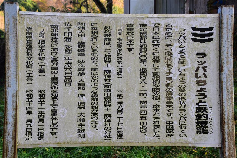 太田イチョウ3