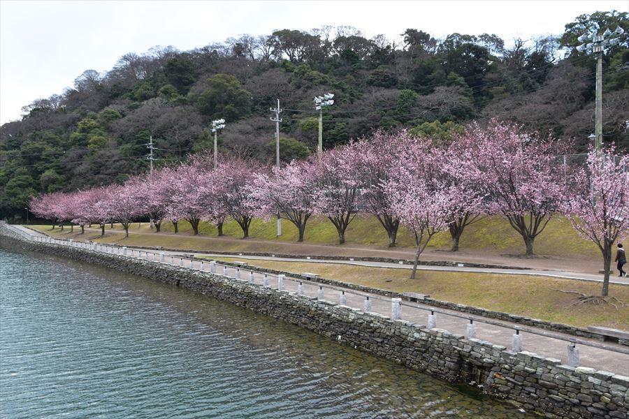 蜂須賀桜3