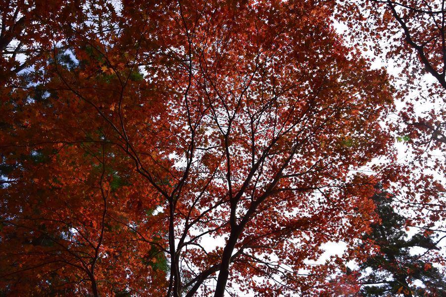 大滝山紅葉4