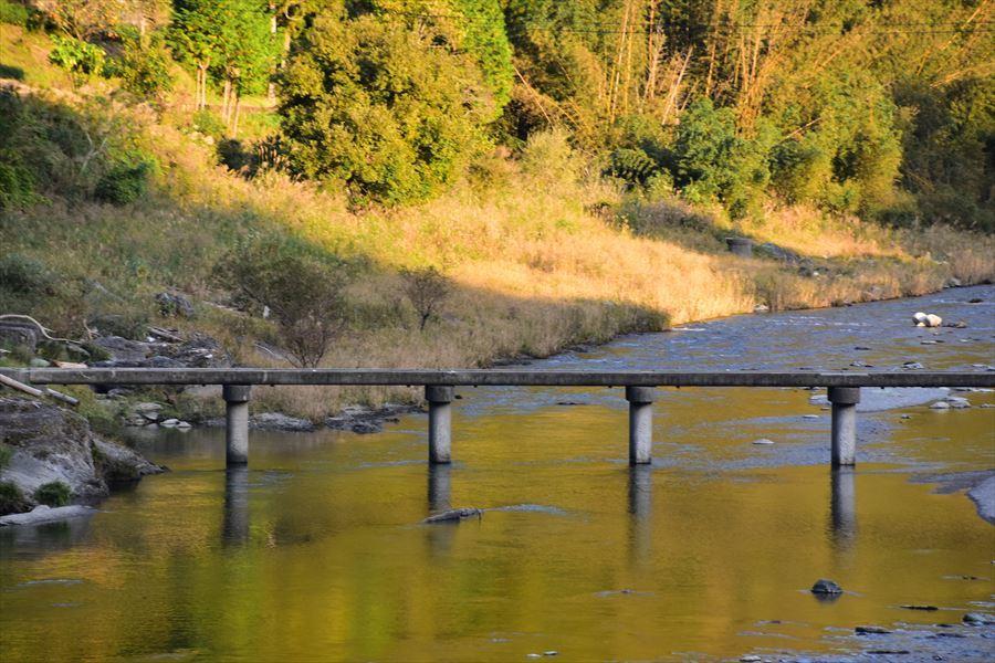 紅葉潜水橋2