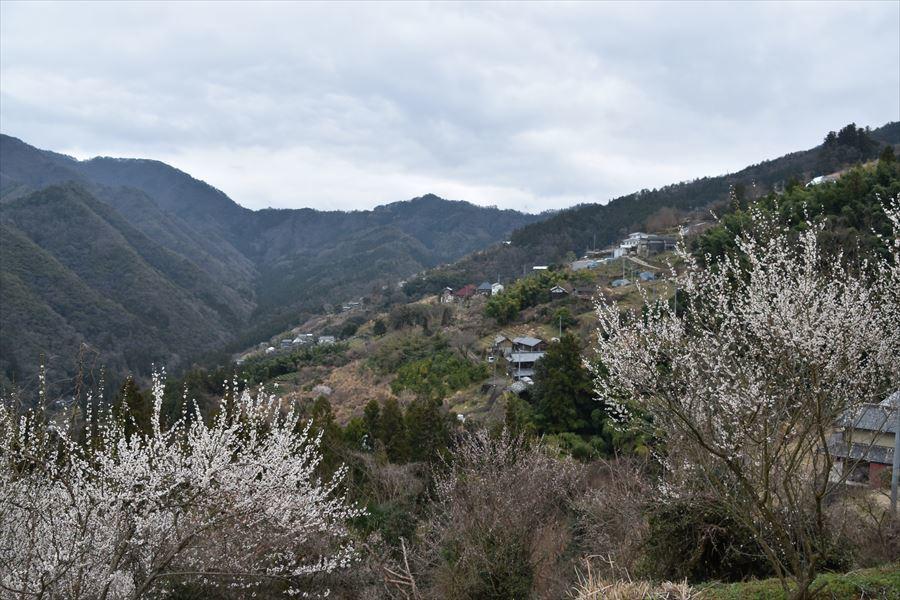 望郷の丘1