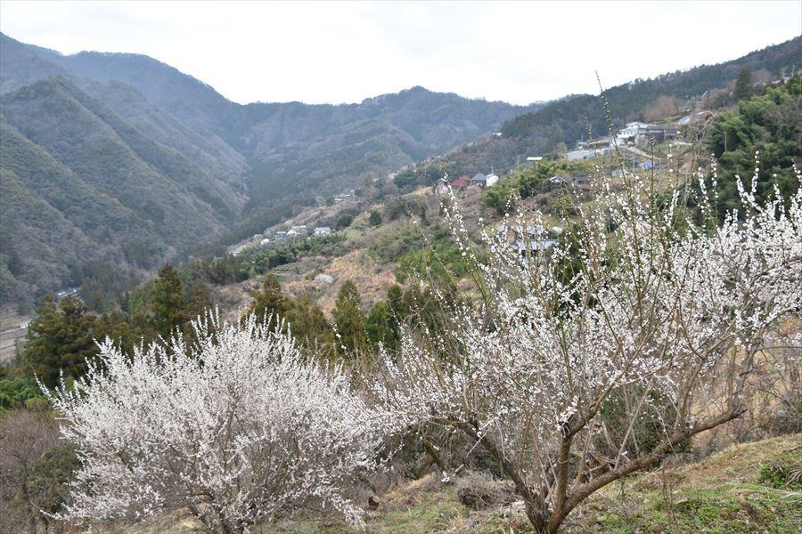 望郷の丘3