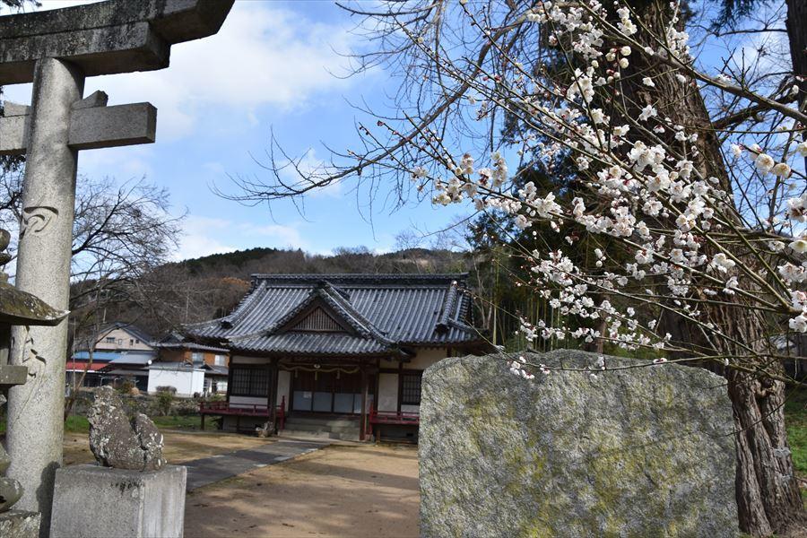 熊野神社梅3