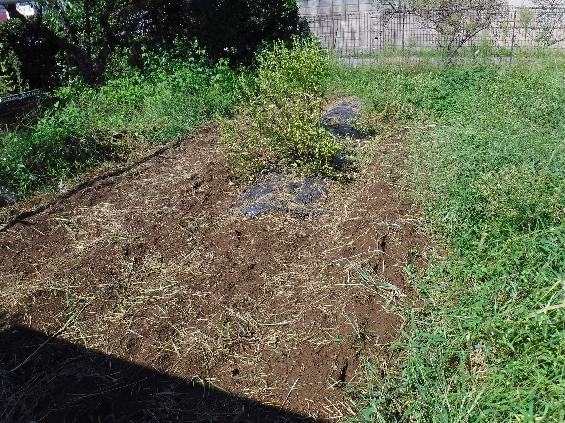 ブログ 少しづつ菜園も綺麗になって行く 1.jpg