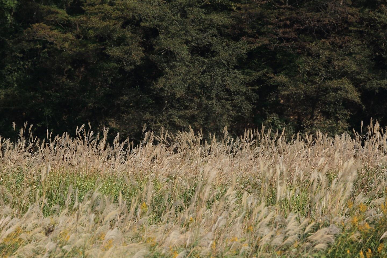 ブログ この上をシラサギが飛ぶのを待っていた.jpg
