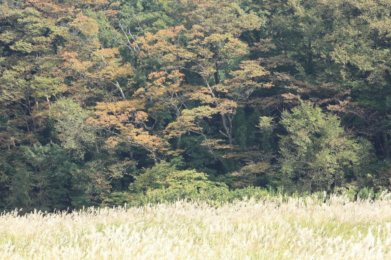 ブログ 里にもちょっぴり秋錦が来ています.jpg