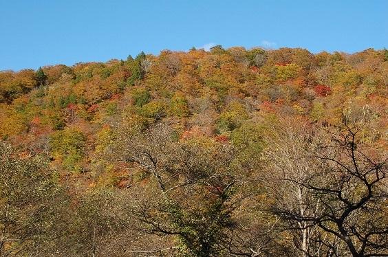 外はこんな秋景色.jpg