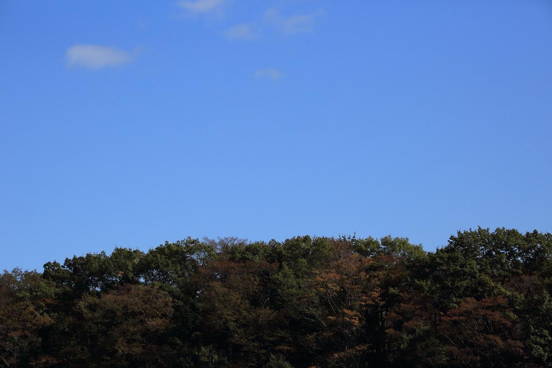 ブログ 里にも錦の秋が.jpg