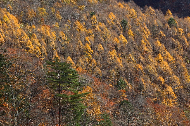 ブログ カラ松の山.jpg