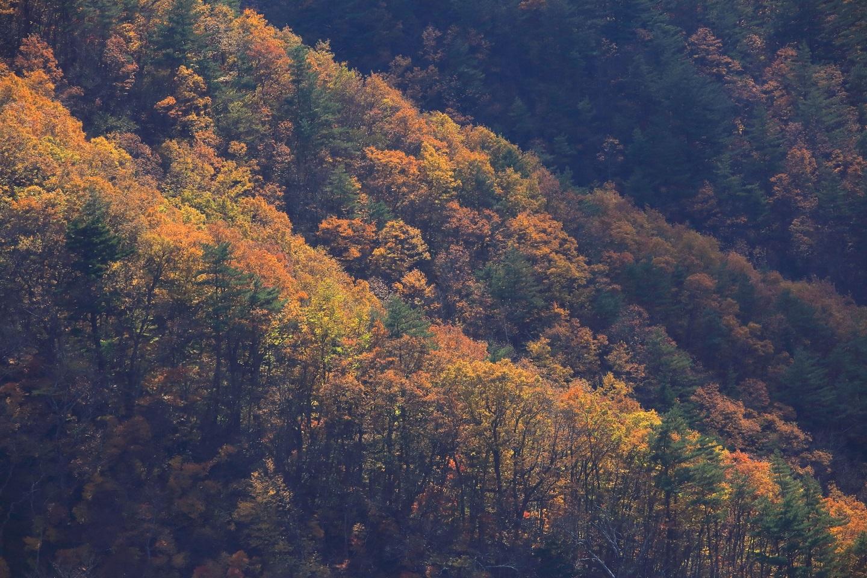 ブログ 行く秋の山景色.jpg