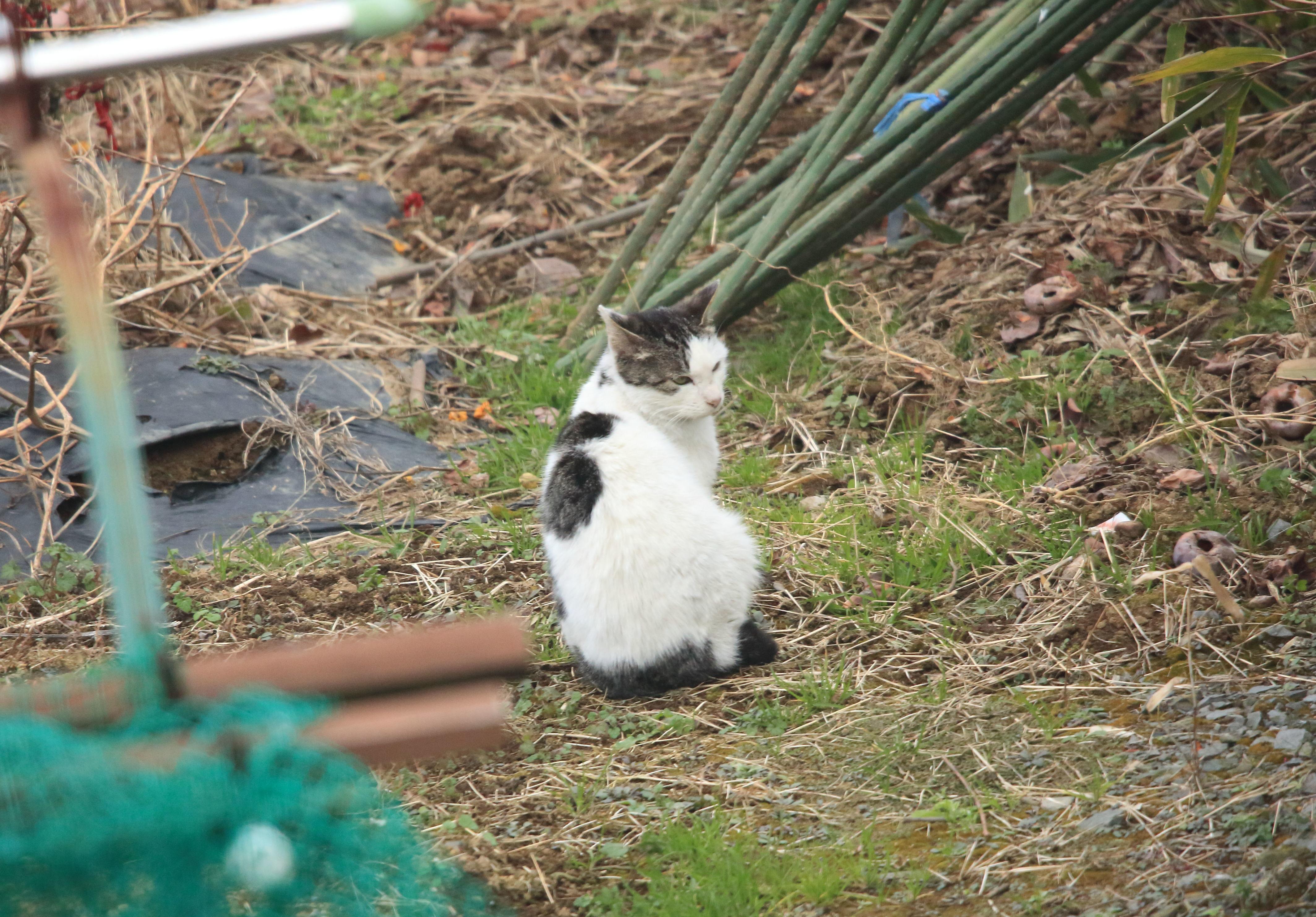 菜園の訪問者.JPG