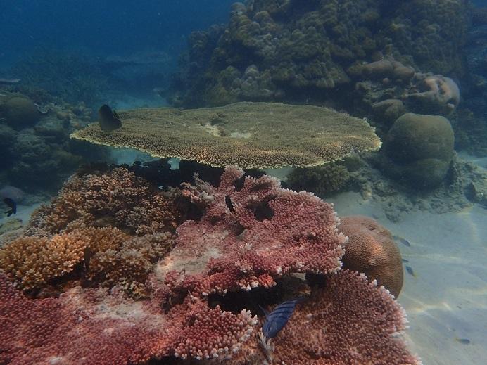 サンゴP8151883
