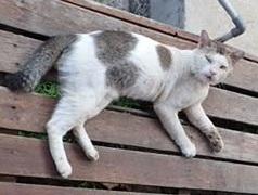 オス猫P8133427