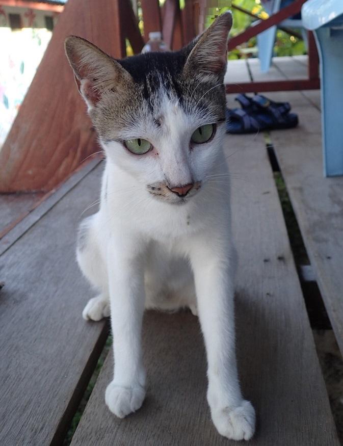 2ママ猫P8131224