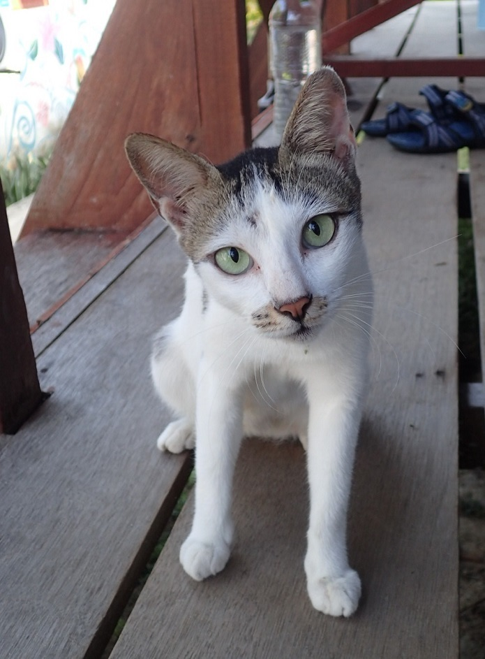 ママ猫P8131223