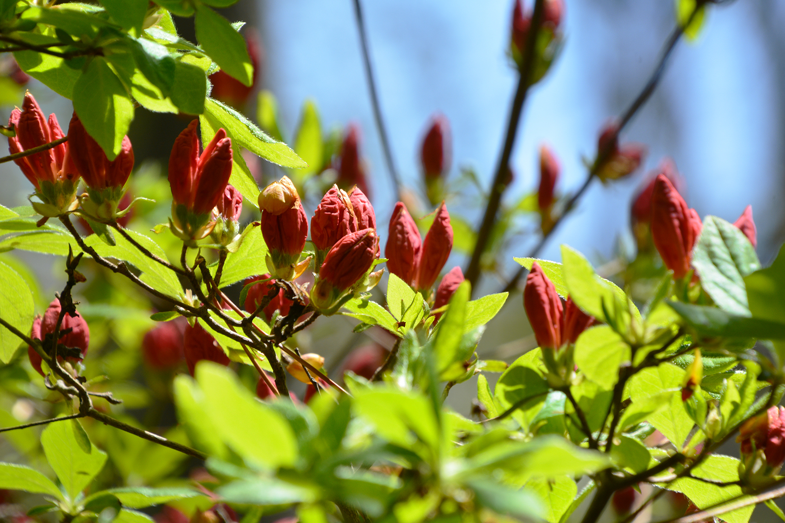 能代市御指南町 日吉神社620200301