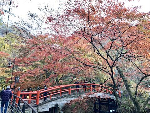 1757-河鹿橋の紅葉