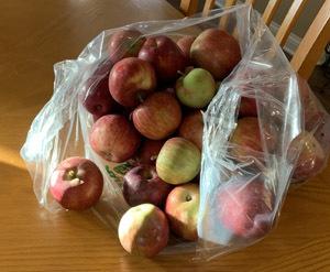 apples1904.jpg