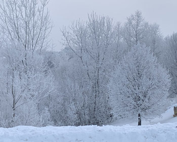 frost02102003.jpg