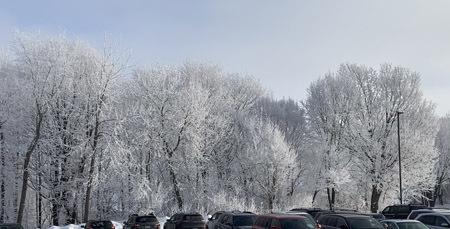 frost02102004.jpg
