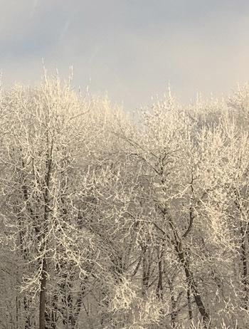 frost02102005.jpg