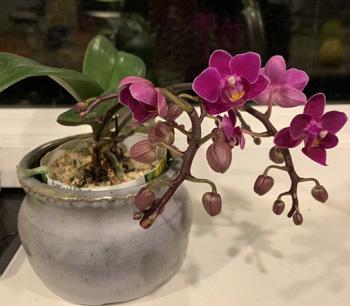 orchid02012002.jpg