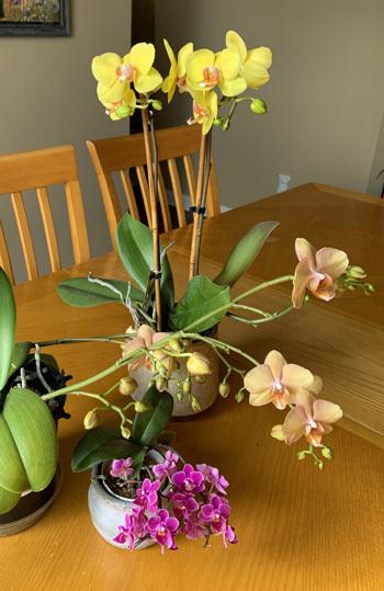 orchid02262001.jpg