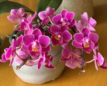 orchid02262002.jpg