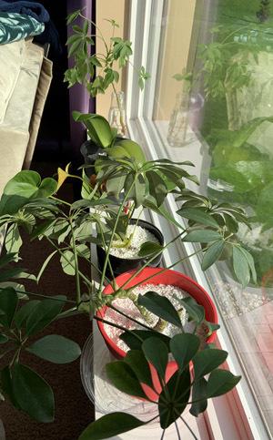 plants09301901.jpg
