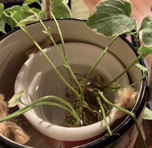 plants09301906.jpg