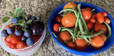 tomatosauce1901.jpg