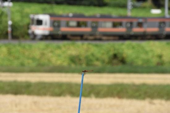 2019年9月29日撮影 飯田線1415M 313系とトンボ
