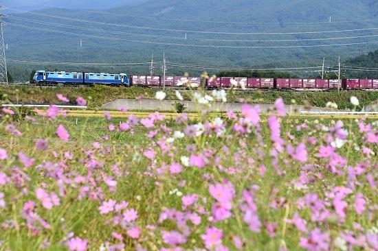 2019年9月30日 東線貨物2083レ EH200-17号機と秋桜
