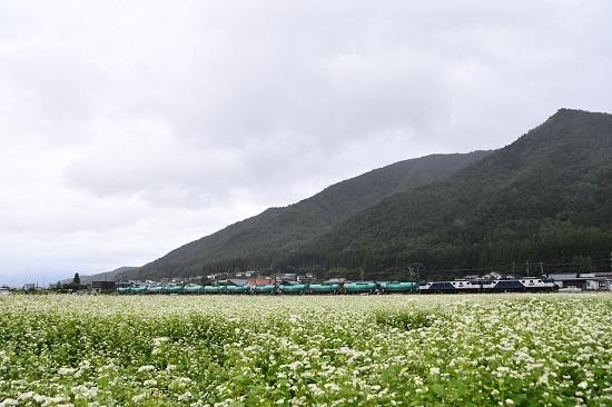 2019年8月30日 西線貨物8084レ 貨物の編成と蕎麦の花
