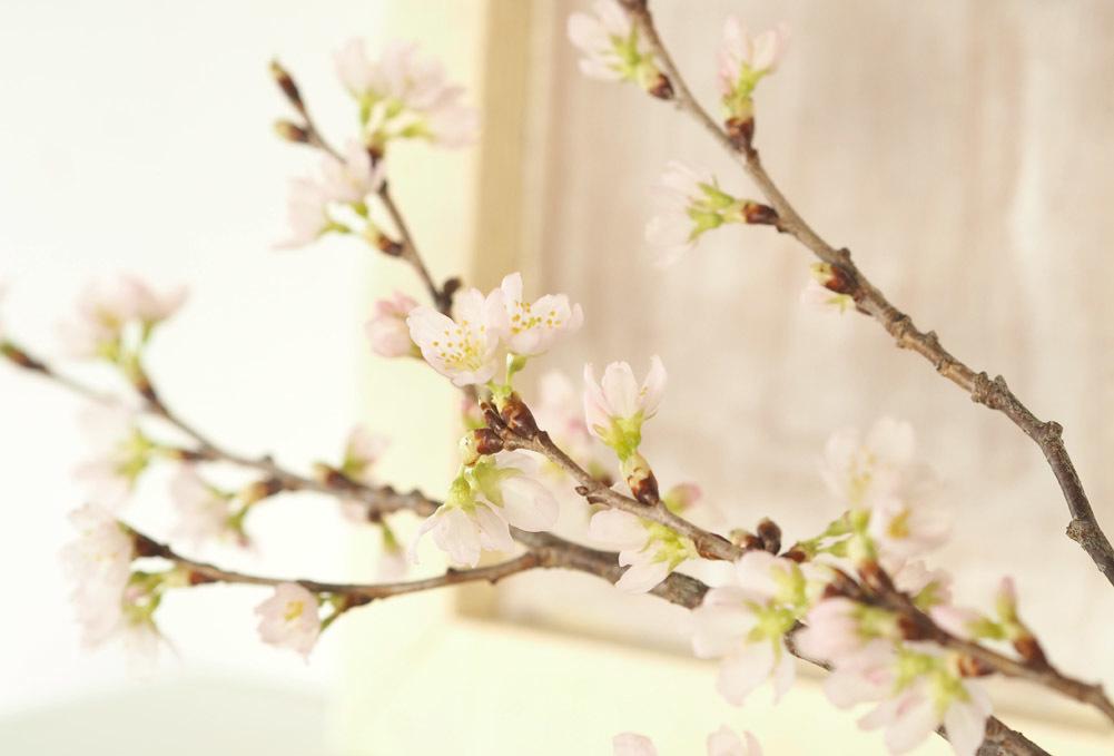 春を告げる ...
