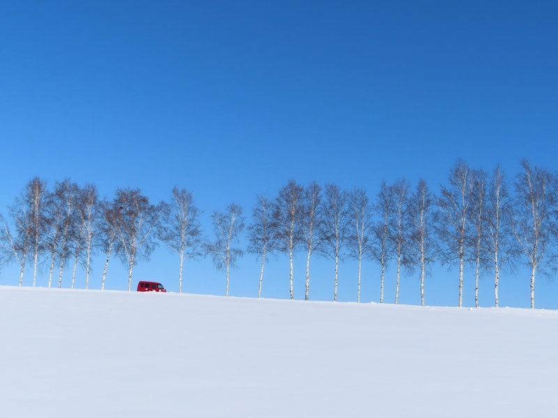 白樺と郵便車