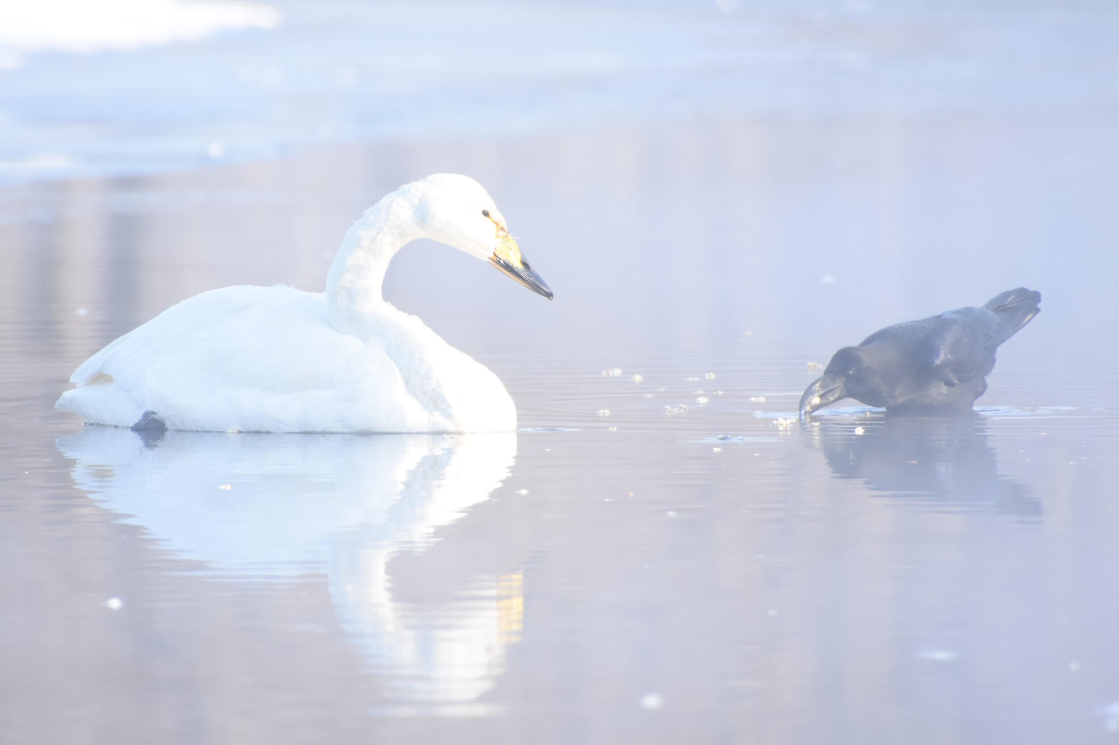 冬の絆 (2)