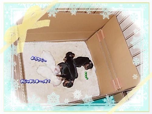 DSCN9983_202001241122108aa.jpg