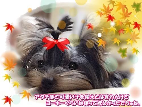 booyan_201911061602063f5.jpg