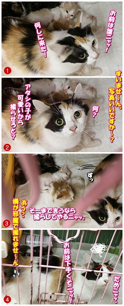 cats_201911101320077ec.jpg
