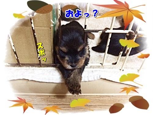 moonko3.jpg