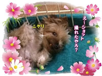 moonko5.jpg