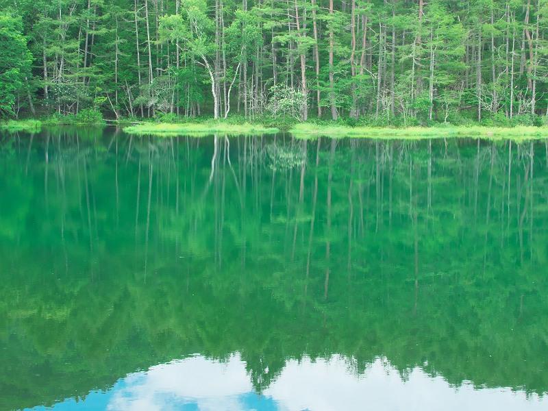 白樺と緑の池