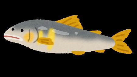 fish_ayu.png