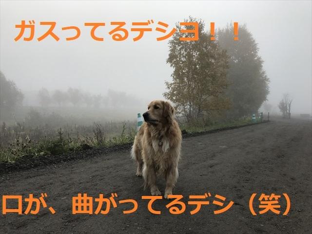 IMG_4381_PPP.jpg