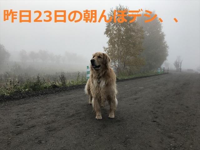 IMG_4382_PPP.jpg